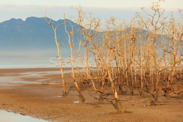 Martwych drzew plaży niski fala parku Zdjęcia stock © Juhku