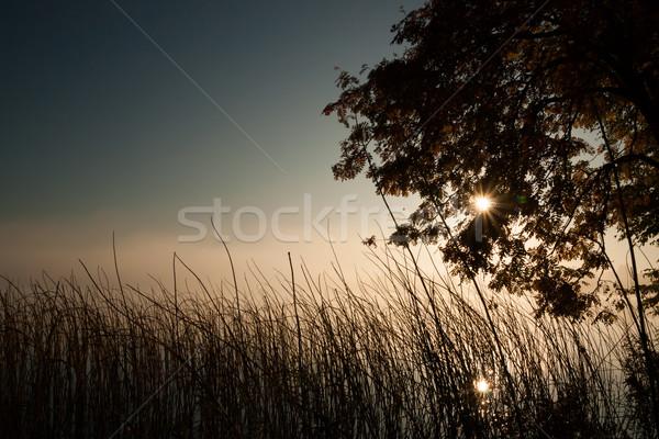 Humeurig ochtend achtergrond bladeren zonsopgang meer Stockfoto © Juhku