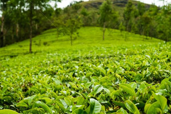 Stok fotoğraf: çay · Hindistan · bulutlu · gün · ağaçlar · dağ