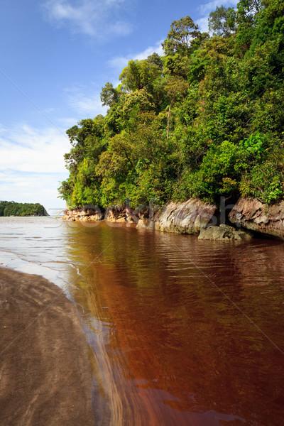 Dense jungle and blue sky Stock photo © Juhku