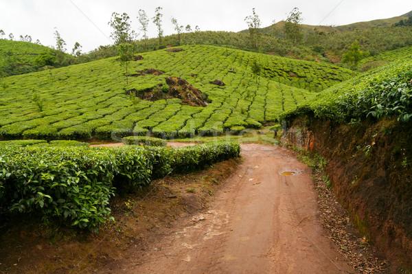 Chá Índia estrada nublado dia paisagem Foto stock © Juhku