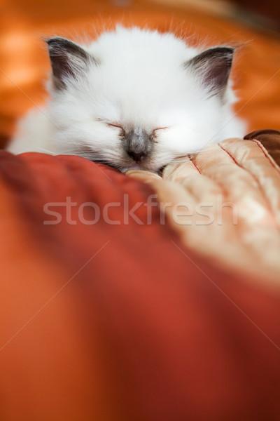Kitten sleeping on bed Stock photo © Juhku