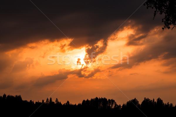Vurig zonsondergang silhouet bos bewolkt natuur Stockfoto © Juhku