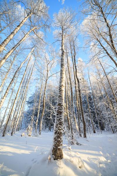 ストックフォト: 雪 · カバー · ツリー · 観点 · 表示