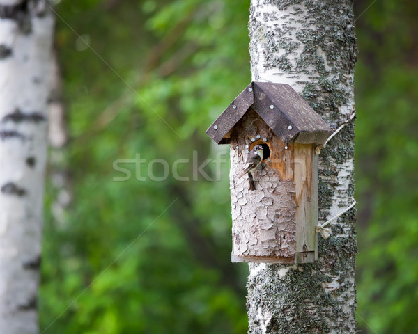 Birdhouse and tiny bird Stock photo © Juhku