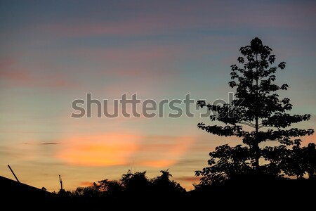 Stock photo: Colorful sunset clouds and tree silhouettes
