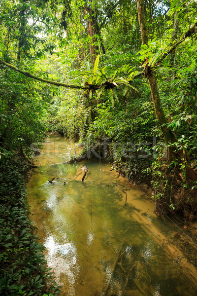 小 河 叢林 婆羅洲 馬來西亞 樹 商業照片 © Juhku