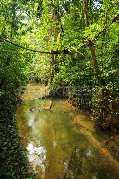Küçük nehir orman borneo Malezya ağaç Stok fotoğraf © Juhku