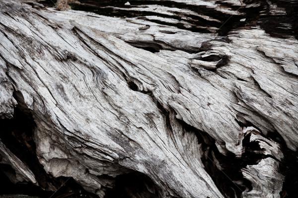 Szary driftwood naturalnych drzewo streszczenie Zdjęcia stock © Juhku