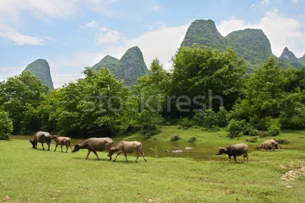 Herd pasture in beautiful landscape of china Stock photo © Juhku
