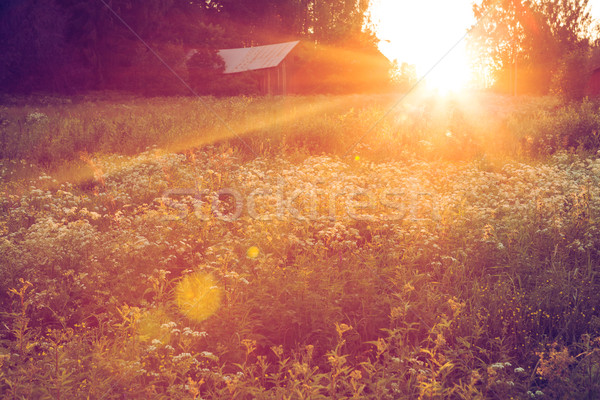 Stock photo: Meadow landscape at sunset