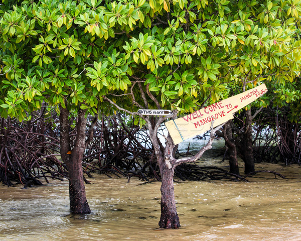Mangrove tour sign in tree Stock photo © Juhku