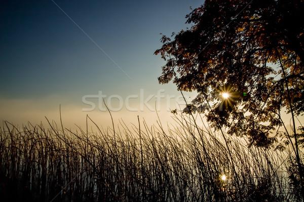Humeurig ochtend hemel boom zon landschap Stockfoto © Juhku