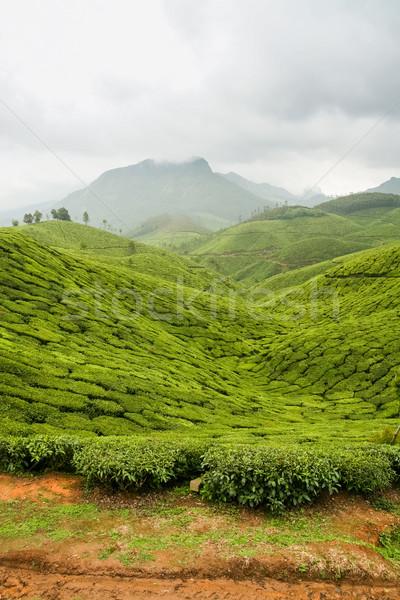 Tea plantations munnar india Stock photo © Juhku