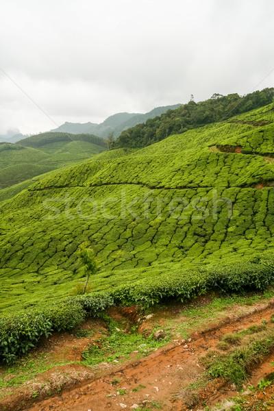 Chá Índia estrada nublado dia folha Foto stock © Juhku