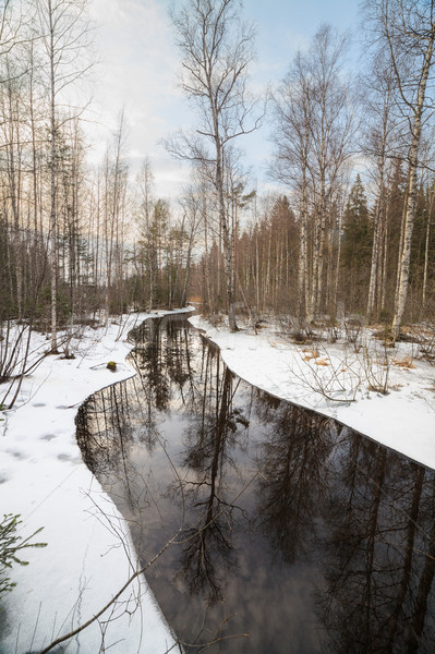 Partially frozen forest river Stock photo © Juhku