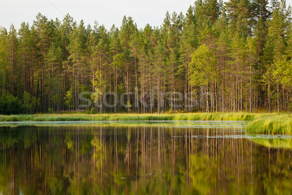 Serene sunny morning forest reflection Stock photo © Juhku