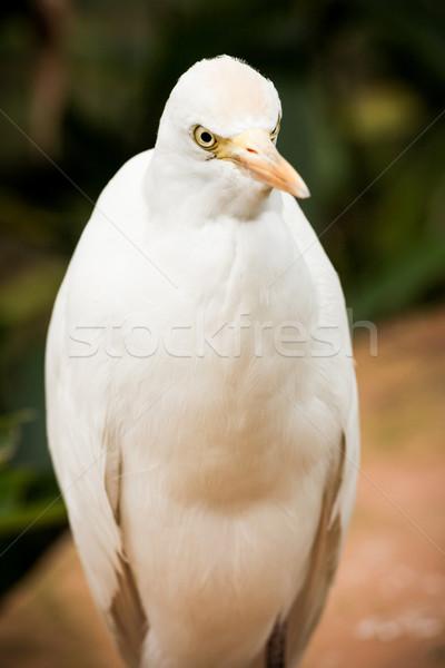 Sığırlar portre beyaz göz kuş park Stok fotoğraf © Juhku
