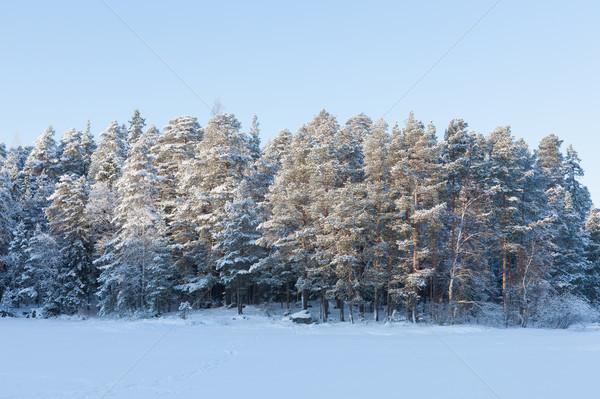 Fagyott tó hó fedett erdő napos Stock fotó © Juhku