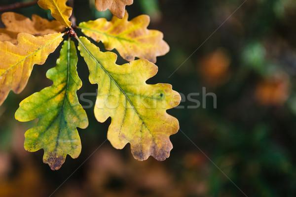 カラフル 紅葉 ツリー 森林 抽象的な 葉 ストックフォト © Juhku