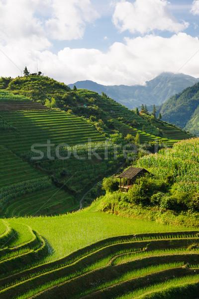 ストックフォト: 風景 · 写真 · コメ · 中国 · 垂直 · 自然