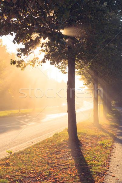 Stock photo: Sun rays through tree next to a road