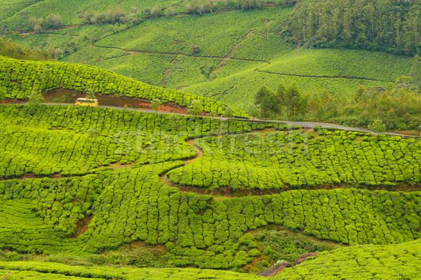 Thé Inde nuageux jour feuille arbres Photo stock © Juhku