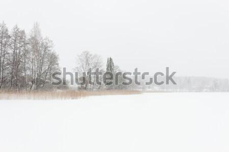 Blizzard inverno panorama congelato lago Finlandia Foto d'archivio © Juhku
