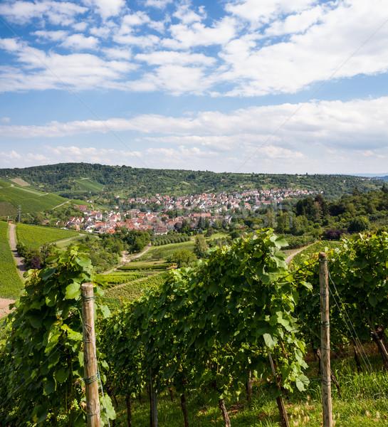 Foto d'archivio: Bella · vino · campi · panorama · estate · giorno