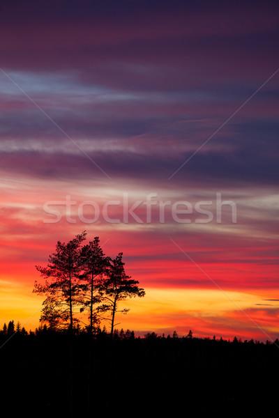 ツリー シルエット 美しい 活気のある 日没 雲 ストックフォト © Juhku