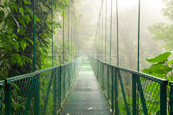 Suspension bridge in rainforest Stock photo © Juhku