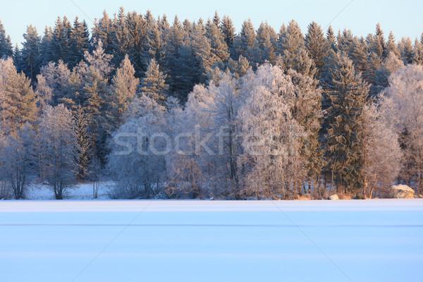 Winter lake scenery in finland Stock photo © Juhku