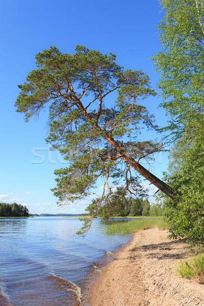 Pequeño arena playa verano Finlandia oculto Foto stock © Juhku