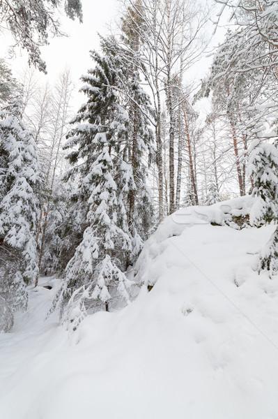 árboles nieve cubierto forestales invierno paisaje Foto stock © Juhku