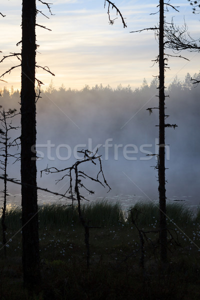 Foggy dawn at forest pond Stock photo © Juhku