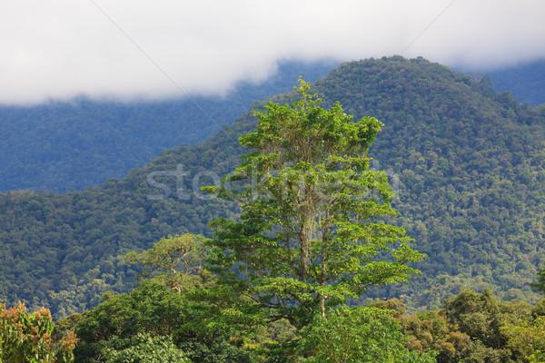 Esotiche foresta pluviale panorama parco borneo Malaysia Foto d'archivio © Juhku