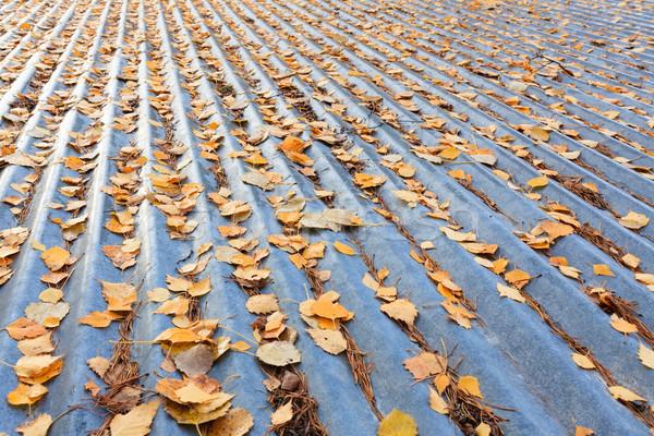 Autumn leaves on roof Stock photo © Juhku