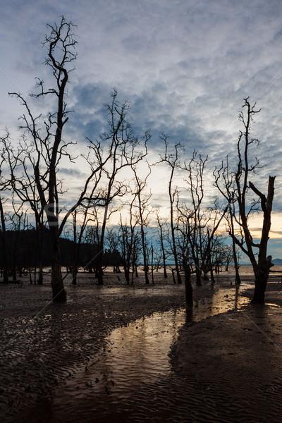 Halott erdő sáros tengerpart szürkület alacsony Stock fotó © Juhku