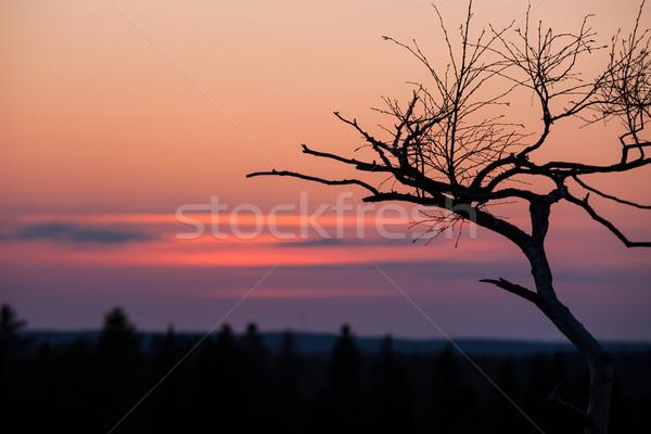 Kicsi fa sziluett naplemente szürkület piros Stock fotó © Juhku