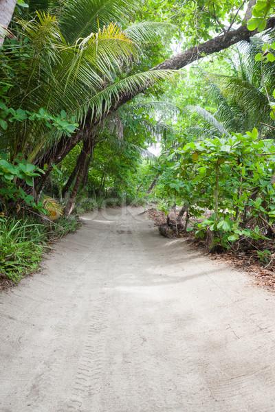 Estrada de terra tropical floresta sol brilhante estrada Foto stock © Juhku