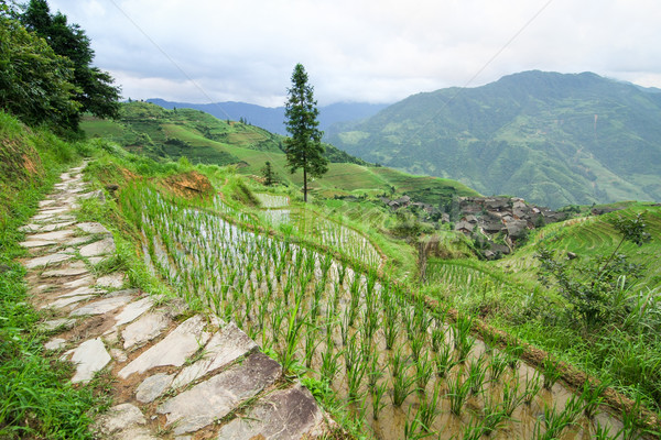 Stone pathway in longshen rice terraces Stock photo © Juhku