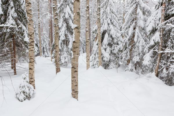 Bomen sneeuw gedekt bos winter landschap Stockfoto © Juhku