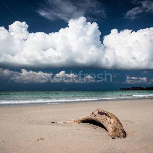 Plaży driftwood ciemne Błękitne niebo piasku biały Zdjęcia stock © Juhku