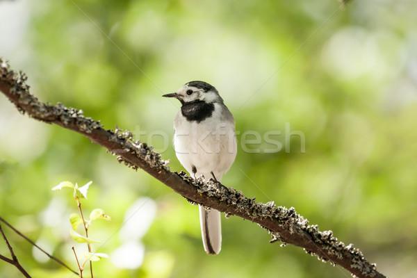 Foto stock: Branco · pássaro · ensolarado · verão · dia