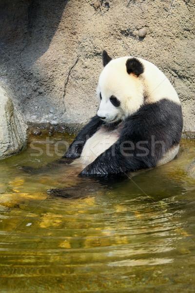 Zdjęcia stock: Gigant · panda · posiedzenia · wody · kąpieli