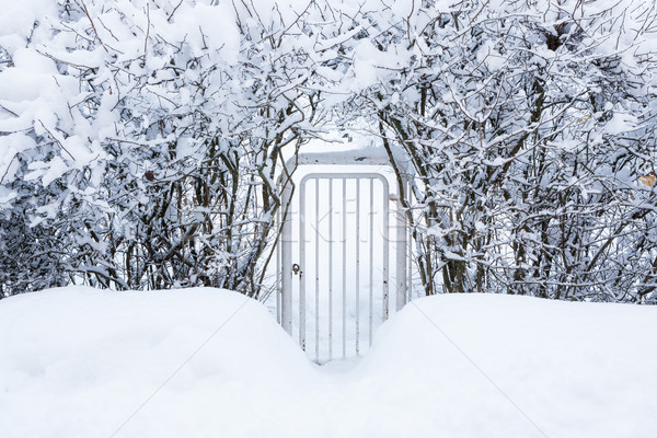 Small gate in hedgerow at winter Stock photo © Juhku