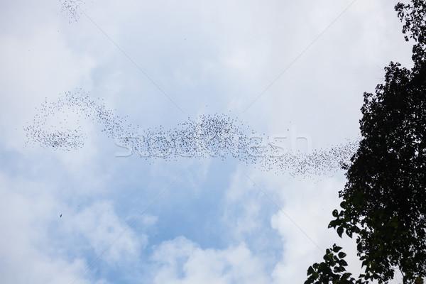 Vliegen park borneo Maleisië natuur groep Stockfoto © Juhku