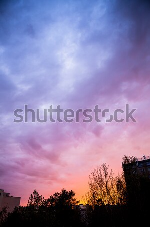 Stock photo: Beautiful sunset sky and tree silhouettes