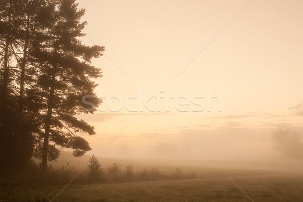 Misty meadow at dawn  Stock photo © Juhku