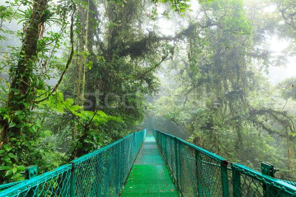 ストックフォト: 吊り橋 · 熱帯雨林 · 絞首刑 · 雲 · 森林 · リザーブ